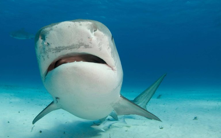 Should You Punch A Shark In The Nose?